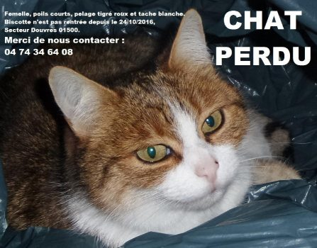 20160108_chatte-perdue_131304-2